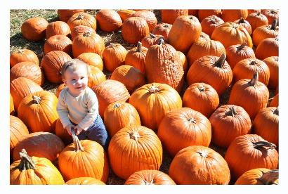 What a lot of pumpkins.  And they all weigh about as much as the baby!