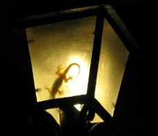 This was in Bohol, Philippines.  Geckos are all over the place, but rarely inside the lantern!