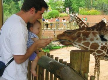 At the Cheyenne Mountain Zoo.  Zookeeper Audrey is feeding the giraffes.  She didn't want to let the cracker go.  I think she wanted the food for herself...